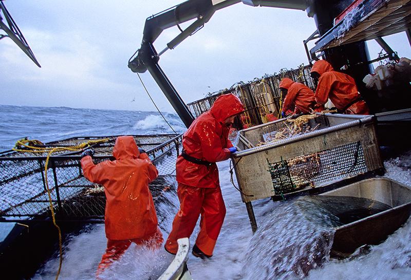 Punjab fisheries Department jobs 2019