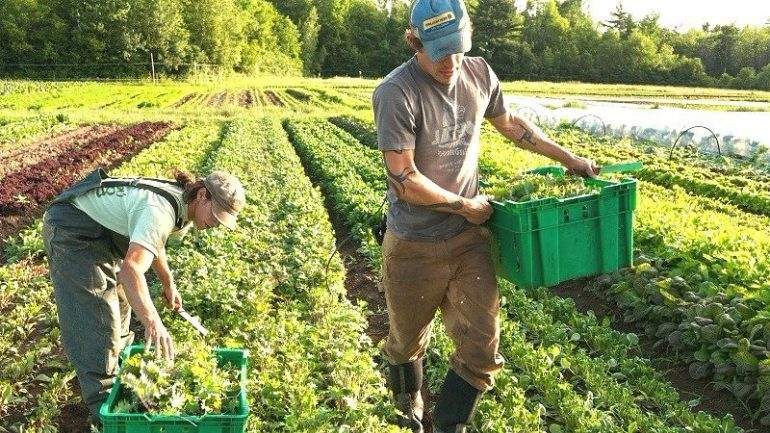 Farm Jobs in Canada